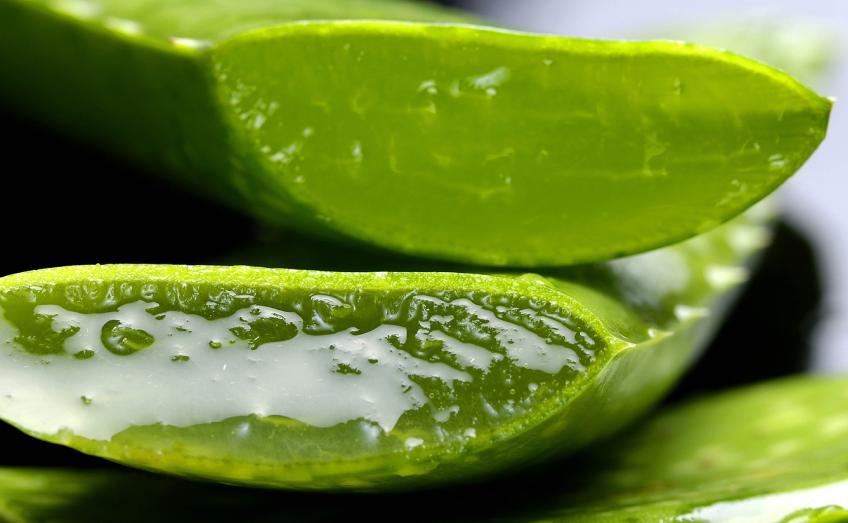 Quali sono i benefici dell'Aloe, cosa è vero e cosa no