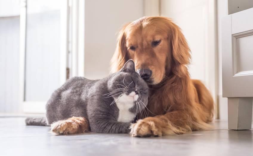 Come proteggere cani e gatti dal covid