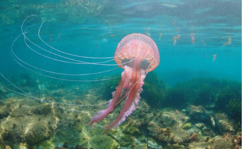 Come difendersi dalle punture di meduse