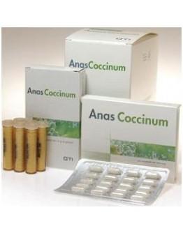 ANAS COCCINUM H 17 30F GLO