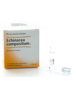 ECHINACEA COMP S 10F 2,2MLHEEL